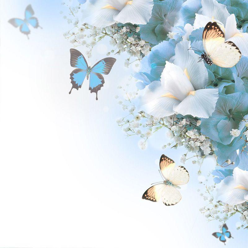 Натяжной потолок с фотопечать бабочка